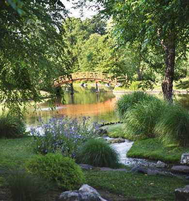 Japanese Garden drum bridge & stream
